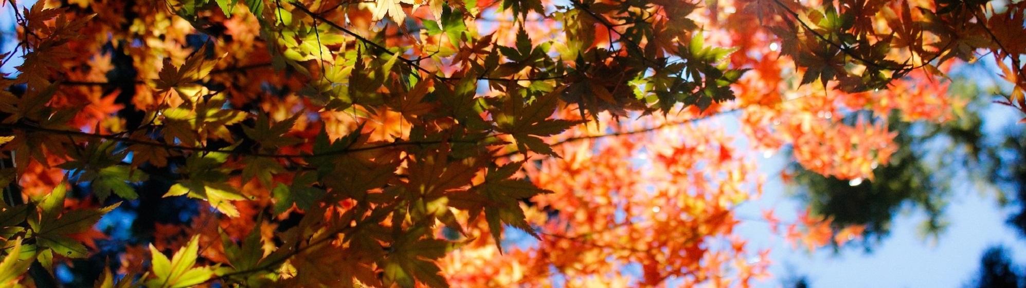 autumn-1209802_1920
